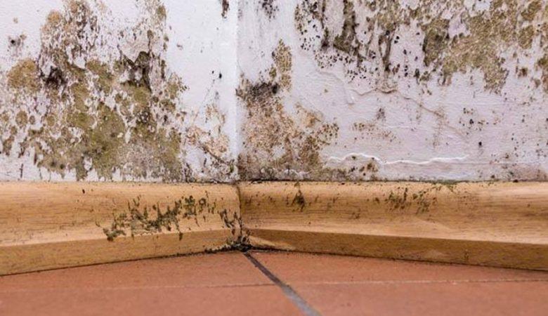 Como acabar com o mofo em sua casa