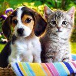 Animais de estimação: quais os melhores para quem mora sozinho?