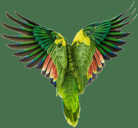 Os melhores amigos do solteiro: como cuidar bem de pássaros