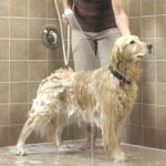 Dicas para dar banho no seu animal