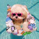 Como cuidar dos animais no verão
