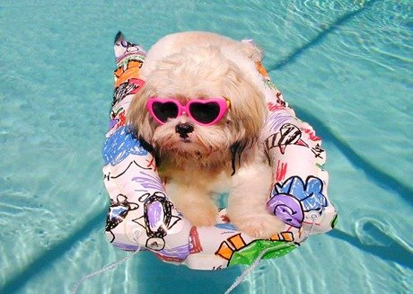 cachorro-piscina.jpg