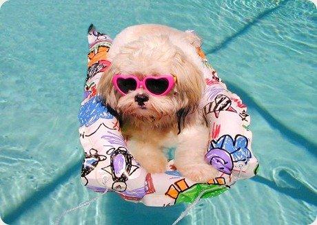 cachorro-piscina