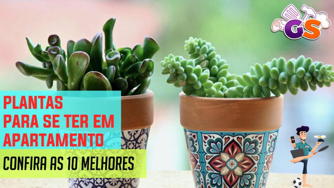 Plantas para se ter em apartamento: As 10 melhores