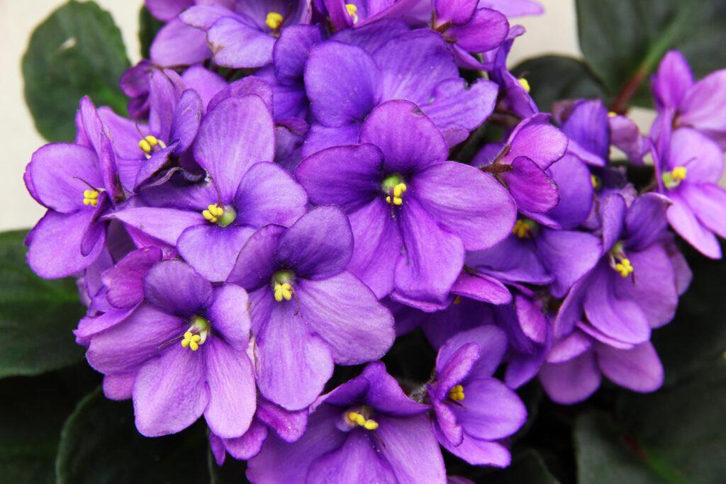 Plantas para se ter em apartamento: As 10 melhores 6