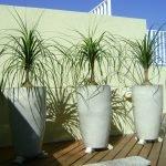 Plantas pra se ter em apartamento: conheça as 7 melhores!