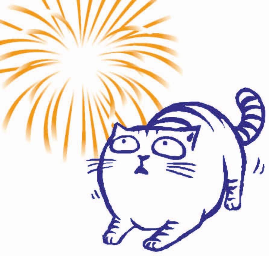 gatos-fogos-de-artificio