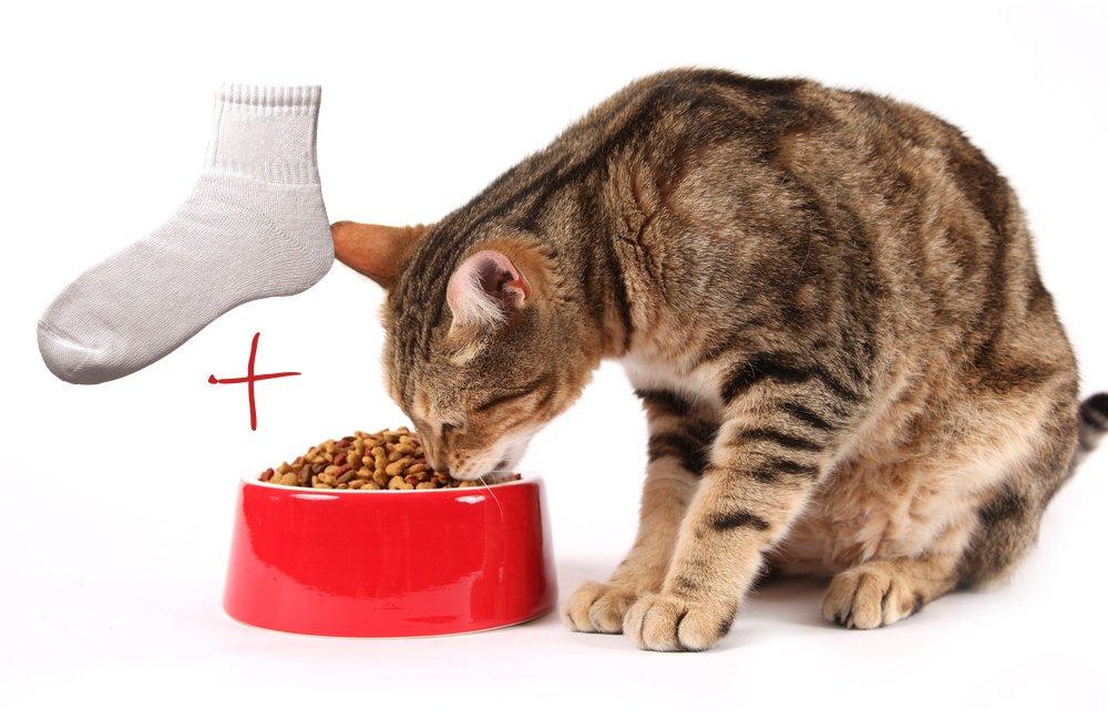 gato-comida-meia