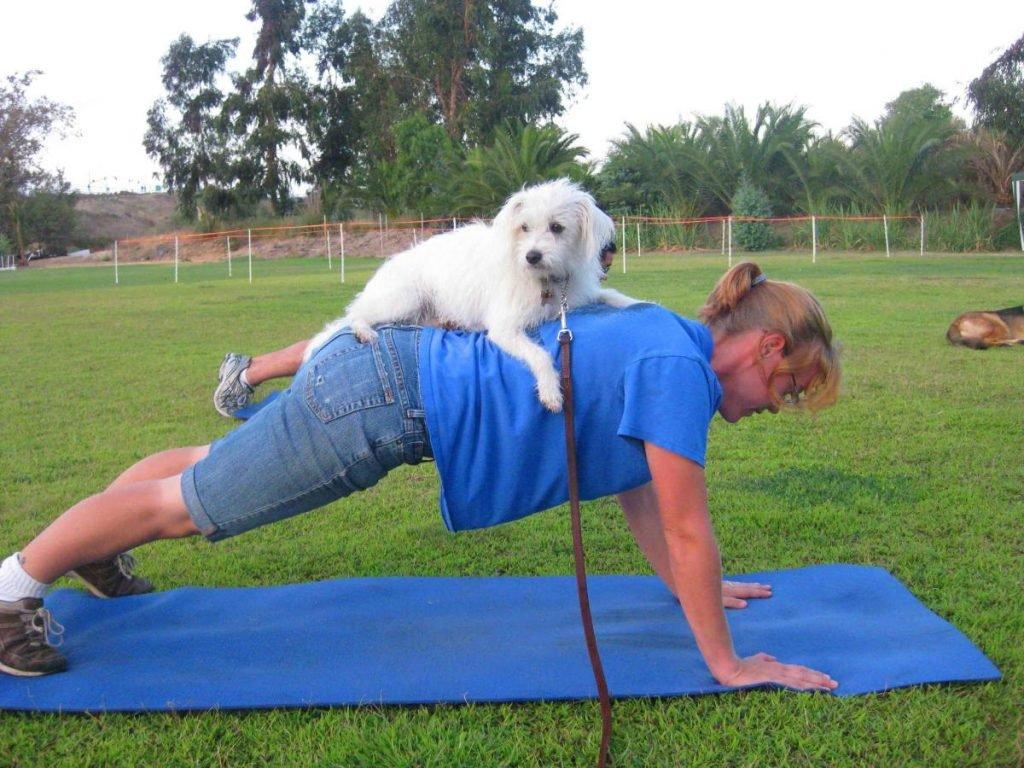 exercicios cachorro