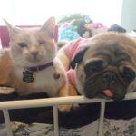 Como fazer viagem internacional com o seu cachorro ou gato