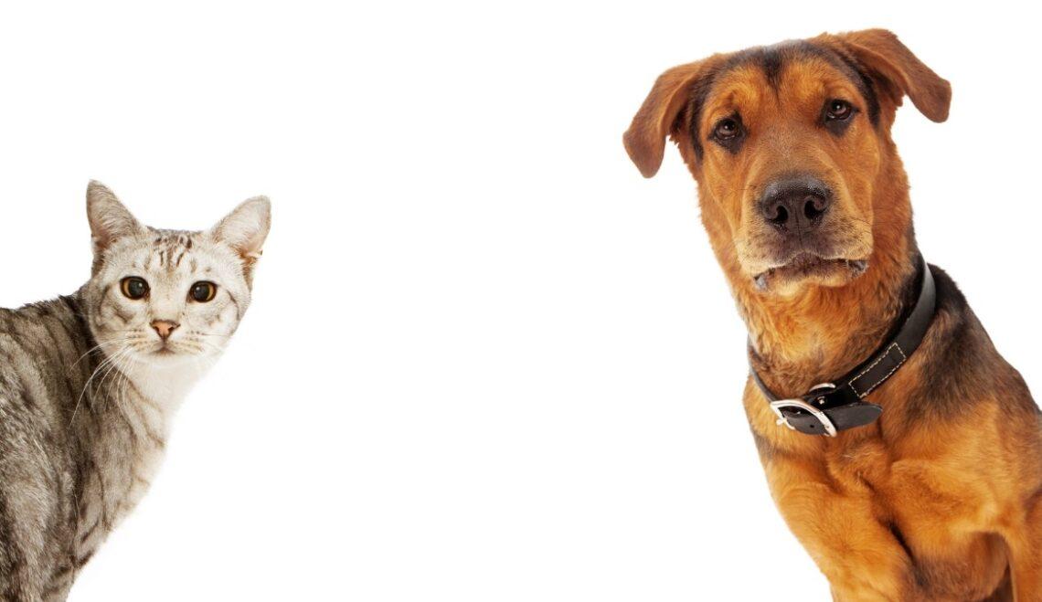 Cães ou gatos – qual o melhor para mim?