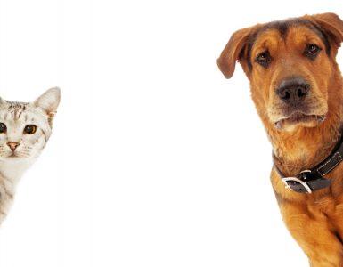 Cães ou gatos - qual escolher