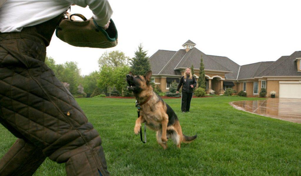 Cão protegendo a casa
