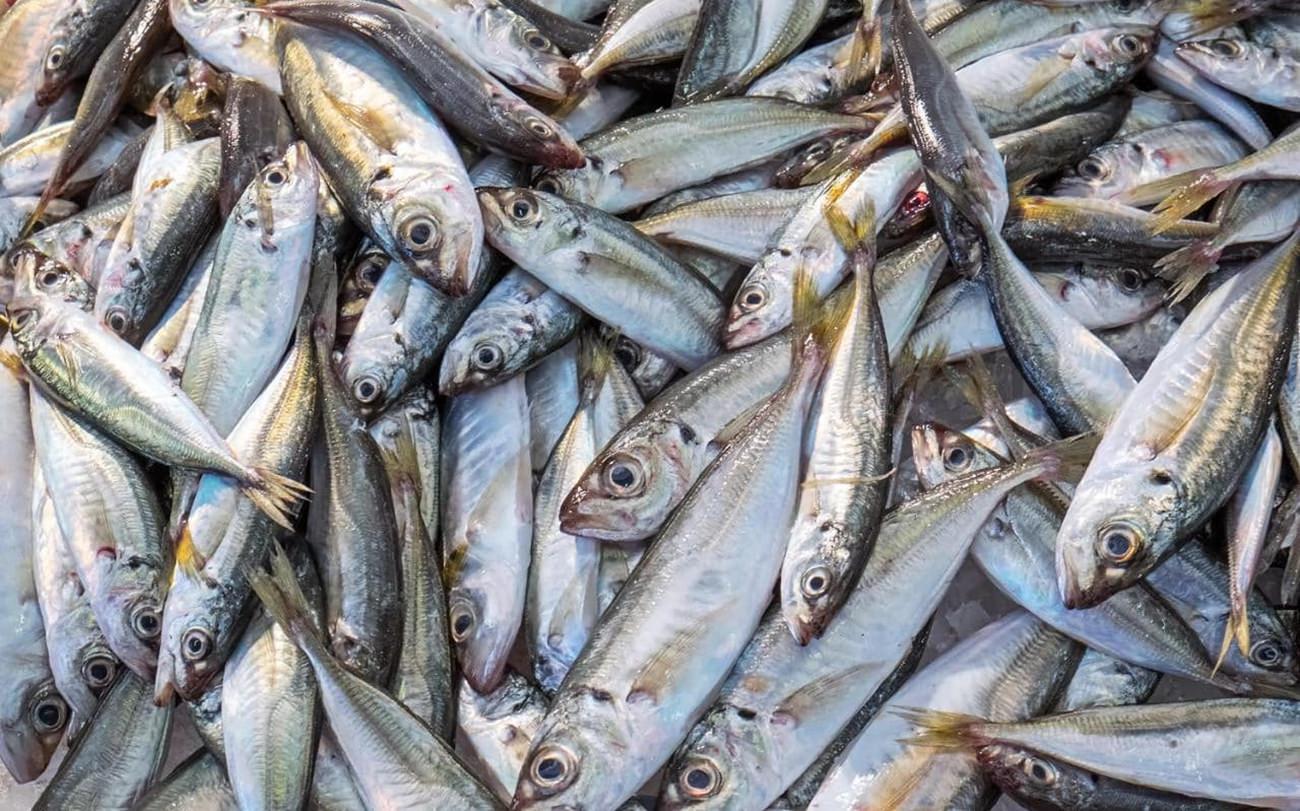 Escolhendo peixe inteiro