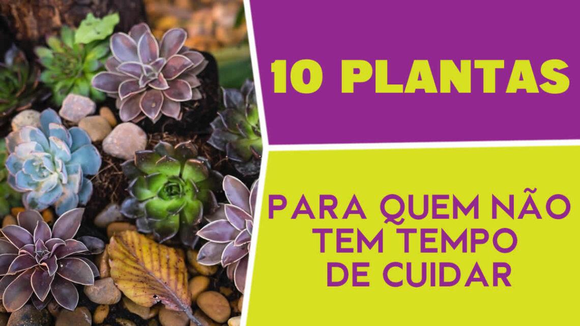 10 Plantas para quem não tem tempo de cuidar